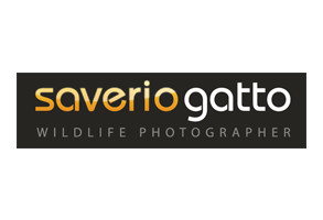 Saverio Gatto Photography
